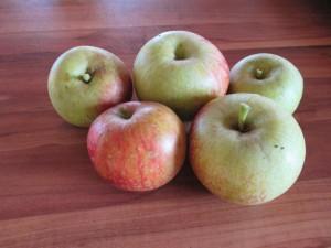 Apfelernte dank Stommel Haus